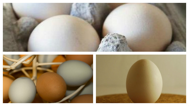 Как яйца продукт без холодильника